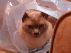 Cat in a quilt bag (I used this bag to hold a UFO)