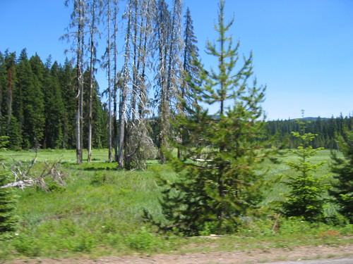 Clackamas Meadow