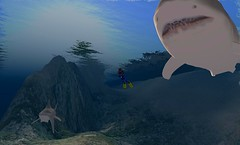 DEN in SL Shark Week with Dive World