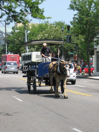 Horse Drawn Sightseeing Tour