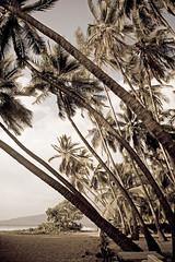 Keei Beach (Paula Marina_portifolio) Tags: usa beach vintage hawaii fineart palmtrees pacificocean bigisland captaincook lightroom coqueiros hawaiiana kealakekuabay oceanopacfico keei agedstyle keei