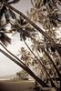 Keei Beach (Paula Marina_portifolio) Tags: usa beach vintage hawaii fineart palmtrees pacificocean bigisland captaincook lightroom coqueiros hawaiiana kealakekuabay oceanopacífico keei agedstyle kee´i