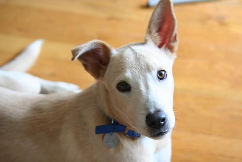 Cute ears