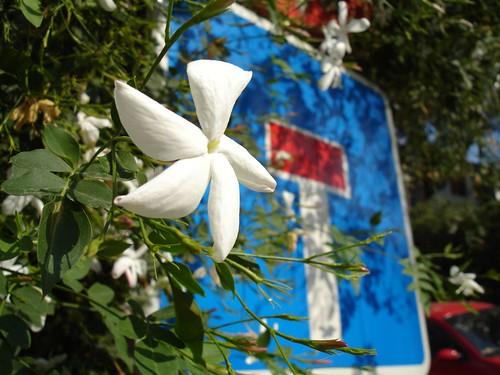Flores y señales