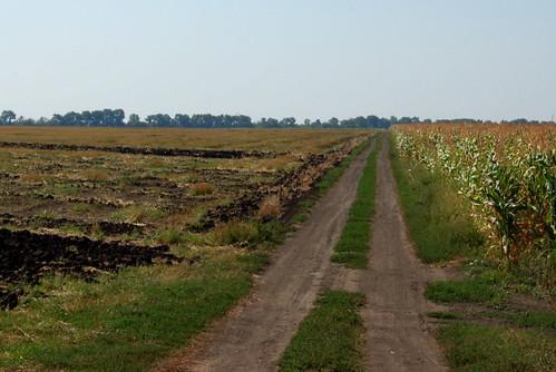 дорога украина поле путешествие