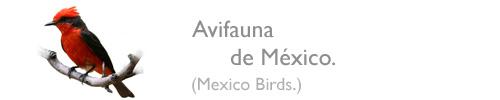 Avifauna de México.