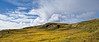 Tundra (dani.Co) Tags: snow cold musgo ice nikon arctic greenland frío hielo warming tundra global permafrost globalwarming clima ártico líquen climaticchange groenlandia calentamiento calentamientoglobal danico
