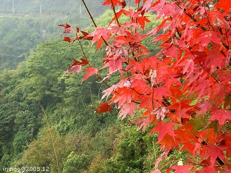 紅葉與青山 (by indigo@Taiwan)
