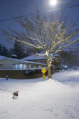 snow night-9 by joshc