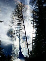 Forêt mystère lumière (JMVerco) Tags: forest photomanipulation digitalart creative forêt foresta création creazione amazingamateur proudshopper stealingshadows awardtree jmlinder
