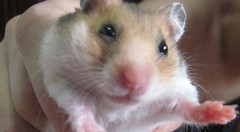 IMG_1741 ([bakaWOOFY]) Tags: hamsters