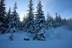 IMG_4342 (majena) Tags: winter snow mountains czechy