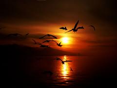 zmiri yaamak,zmirde yaamak... (Yener ZTRK) Tags: travel sunset sea turkey seagull trkiye scenic turquie trkorszg trkei puffin deniz smyrna trk ege manzara gnbatm turchia  mart turkei aegeansea silet supershot egedenizi turcha trkiyecumhuriyeti aplusphoto theunforgettablepictures flickrlovers turkqua yenerztrk  trshot t t tp t egekrfezi aegeangulf dalgacmart
