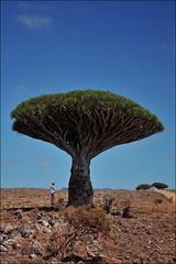 Dixam, Socotra, Yemen (red_ink) Tags: yemen dragonblood socotra soqotra dixam