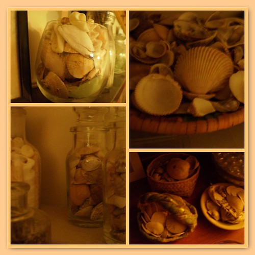 Some of my seashells
