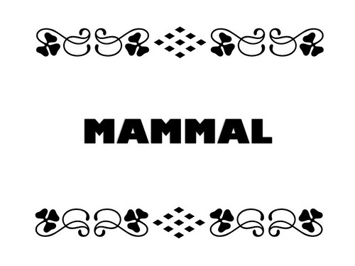 Buzzword Bingo: Mammal
