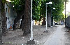 DSC07312 (ftessa) Tags: argentina station train palms tren buenosaires camino pedestrian palmeras palm estacion passage palmera donde traks pasaje urquiza peatonal wiba adivinen ftessa