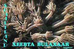 QURUXDA BADA BULAXAAR (LUQMAN STUDIO) Tags: somaliland daawo dhamaantiin