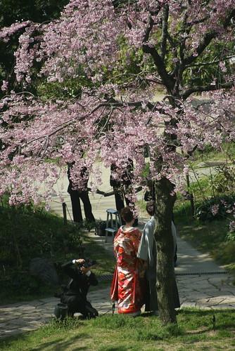 photo de mariage sous les sakura