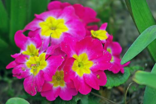 flowers, istanbul, pentax k10d