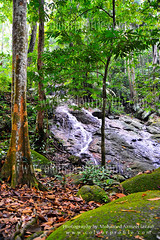 Forest Research Institute Of Malaysia (FRIM) (www.Colourprofile.net) Tags: tree forest nikon hiking waterfalls malaysia leafs kl d3 frim colourprofile doubledot azzu mohamedazmeel