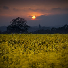 Farmer Dodging In Tractor Tracks (jasontheaker) Tags: uk sunset england sun church field yellow twilight dynamic yorkshire rape ranges oilseed arthington landscapephotography jasontheaker harewoodhouse magichour