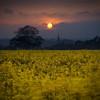 "Farmer Dodging In Tractor Tracks (jasontheaker) Tags: uk sunset england sun church field yellow twilight dynamic yorkshire rape ranges oilseed arthington landscapephotography ""jasontheaker"" ""harewoodhouse"" ""magichour"""
