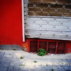 life is growing everywhere (mert_yuksel) Tags: life red plant ground bloom growing everywhere hayat yer bitki filiz krmz bymek heryerde yetimek