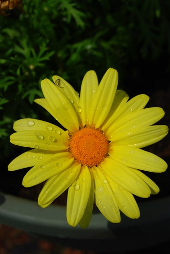 daisy DSC_7581