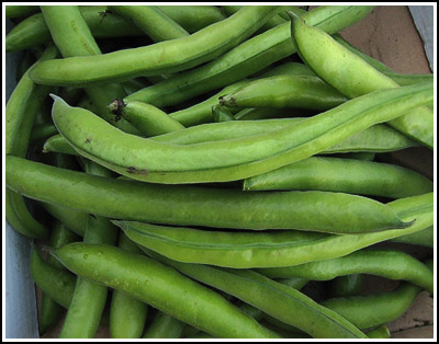 broadbeans copy