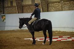 Cappi standing 2 (Tisane) Tags: horses dressage cappi