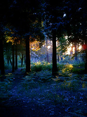 Magic forest at sunset (Calzoncillos) Tags: wood flowers blue trees light sunset shadow orange plants sun plant flower color colour tree green nature overgrown beautiful field grass leaves yellow night daisies forest dark landscape gold lights golden leaf moss spain bush woods colorful mood moody chaos dusk path many magic blues peaceful bilbao growth bosque faery mysterious vegetation daisy mystical colourful wilderness canopy treeline leafs magical bushes clutter overgrowth folliage solemn forestal leioa wildness evocative