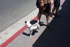 dog - one of many (dizoburoiv) Tags: california seagulls signs island catalina pigeons catalinaisland