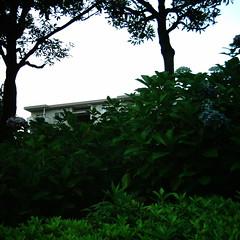 【写真】ミニデジで撮影した庭木越しの団地