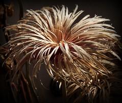 Burst (philwirks) Tags: abstract picnik myfavs luminosity philrichards cooliris show08 unlimitedphotos philwirks