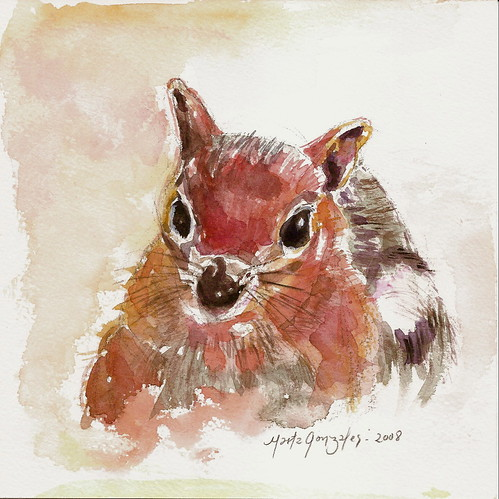 squirrel, watercolor