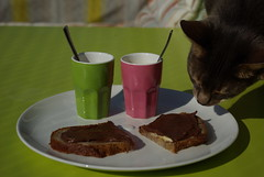 (sabine_butterblume) Tags: breakfast abyssinian marvin kater tomcat facebook frhstck aby abessinier onthebalcony aufdembalkon nutellabro