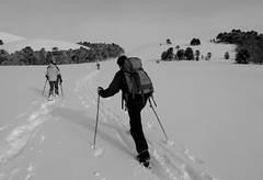 Subiendo al Batea (Mono Andes) Tags: chile winter mountain ski trekking landscape blackwhite backpacking andes invierno pamela montaa araucarias cordillera esqu ule chilecentral cordilleradelosandes regindelaaraucana iipii