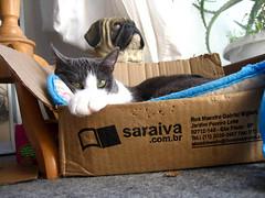 CLARA (CABILUDAS!) Tags: cats cat chats kitten chat gatos gato gata felinos felino gatinhos felin gatas gatinhas