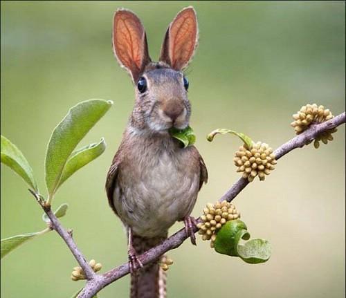 حيوانات وطيور لم تشاهدها من قبل  ( فوتوشوب ) 2822614845_1f87a84569.jpg?v=0