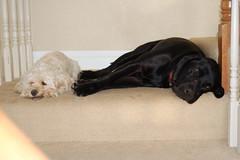 YLJL_20070924_0049 (jlischio) Tags: pets sweetpea bella
