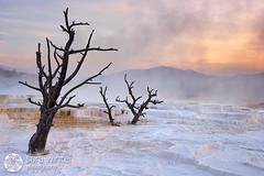 Perpetual Silence (sara winter) Tags: usa america unitedstatesofamerica yellowstonenationalpark wyoming mammothhotsprings karmapotd karmapotw