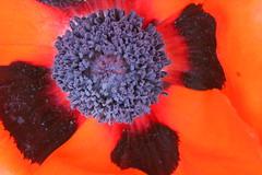 Bloemen - Flora - Bloemen (Marianne de Wit) Tags: flowers animals fauna fleurs natuur fiori dieren bloemen