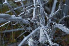 blueberrymtn_092108_0337 (littlegirlPearl) Tags: macro tree gray newhampshire lichen