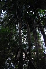 DSC_1804 (tropicbronzed) Tags: bali nature homestay batukaru sacredmountain offthebeatentrackbali