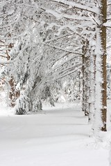 Snowed In (vanderscheer) Tags: snow michigan winterscene