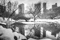 A Manhattan Christmas (stocks photography) Tags: christmas trees winter snow newyork cold reflection tree water america canon amazing centralpark manhattan freezing stocks stocksphotography michaelmarsh canon5dmk11 manhattaninwinter