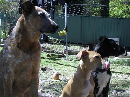 Charlie, Jasper & Layla