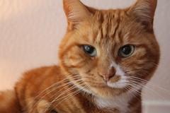 Duncan the Cat