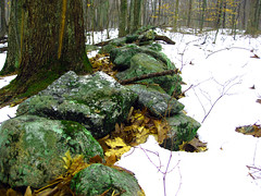Old Stone Wall - Andover (benjaminfish) Tags: trees snow fog forest woods connecticut andover
